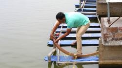 """Hà Nam: Nuôi cá theo kiểu """" đào sông trong ao"""" sản lượng tăng 7 lần"""