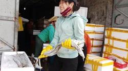 Quảng Bình: Sau những ngày buồn, ngư dân vui mừng vì đánh bắt được nhiều cá hố