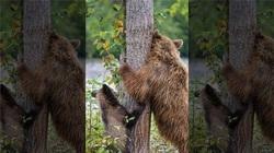 Hình ảnh đáng yêu: Gấu mẹ dạy con cách... gãi lưng