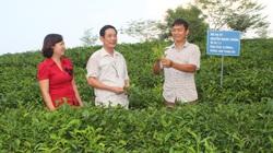 Hội Nông dân hướng về cơ sở, hỗ trợ hội viên phát triển kinh tế