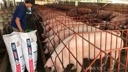 """Tái đàn lợn thời dịch tả lợn châu Phi: Nông hộ nhỏ lẻ """"hết cửa"""" (Bài 3)"""