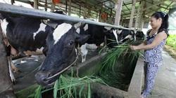 Củ Chi tăng hỗ trợ trang trại, hợp tác xã