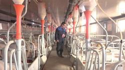 Trung Quốc phát hiện loại cúm lợn mới có thể gây đại dịch