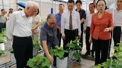 Hải Phòng: Chủ tịch Ban Chấp hành Trung ương Hội NDVN thăm mô hình nông nghiệp công nghệ cao