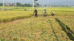 Điện Biên: Vụ đông xuân thắng lợi nhờ chủ động phòng trừ dịch bệnh