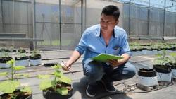 """Giám đốc """"hotboy"""" điều khiển cả trang trại trồng rau quả  bằng điện thoại thông minh"""