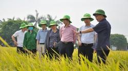 Phó Chủ tịch Hội Nông dân Việt Nam thăm trung tâm sản xuất giống cây trồng hiện đại bậc nhất ở Việt Nam