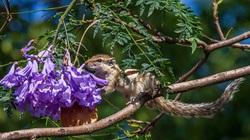 Sóc đất ngửi hoa ở Nepal lọt top 15 ảnh động vật đẹp nhất tuần