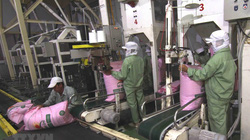 Giá gạo Việt Nam xuất khẩu lên mức cao nhất trong 8 năm