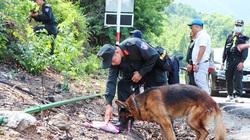 Bác tin chó nghiệp vụ hy sinh khi truy tìm Triệu Quân Sự trốn trại
