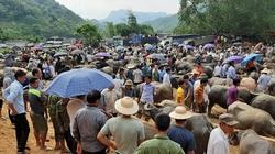 Sôi động chợ bò lớn nhất vùng cao Bắc Kạn