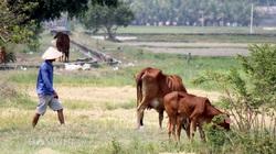 Tây Ninh: Dự án hỗ trợ người nghèo chưa phát huy hiệu quả