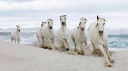 Những con ngựa chiến nổi tiếng trong lịch sử Việt Nam