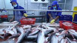 Xuất khẩu cá tra có thể phục hồi hoàn toàn vào quý 3