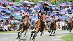 Giống ngựa của người dân miền núi phía Bắc có sử dụng làm kỵ binh Việt Nam được không?