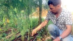 """Gia Lai: Chán tiêu chuyển sang trồng thứ """"rau vua"""", mỗi ngày đút túi 4-5 triệu đồng"""