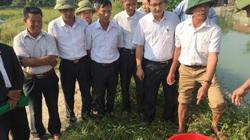 Cứ tưởng tôm càng xanh chỉ nuôi ở miền Tây, đưa về Bắc Giang nuôi cũng lớn nhanh, to khoẻ