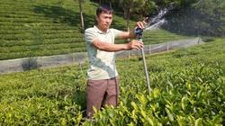 Phát triển nông nghiệp hữu cơ: Cần nông dân đủ lực, sản phẩm đủ mạnh