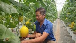 Thanh Hóa: Nông dân trồng dưa công nghệ cao lãi khủng giữa trời nắng nóng gay gắt