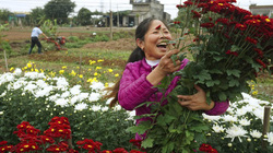 Nam Định: Nông dân giúp nhau làm giàu từ những vườn hoa, cây cảnh