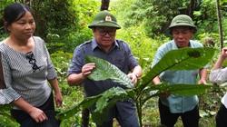 """Chủ tịch Hội Nông dân Việt Nam """"đội mưa"""" vượt núi thăm """"rừng vàng"""" ở Yên Bái"""