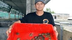 Độc đáo miền Tây: Nuôi cua đinh trong hồ kính, bán 1 con lãi 600-700 ngàn đồng