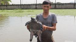 """Nam Định: """"Đút túi"""" gần nửa tỷ đồng/năm nhờ nuôi ba ba gai"""
