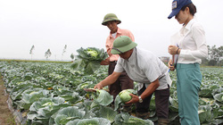 Cán bộ Hội nông dân tiên phong sản xuất nông nghiệp sạch