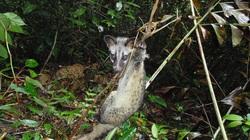 WWF cảnh báo: Có hơn 5 triệu bẫy động vật hoang dã trong các khu bảo tồn ở Việt Nam