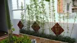 """Trồng 5 loại cây này trước nhà """"gọi"""" may mắn, tài lộc vào ầm ầm"""