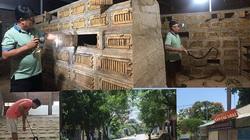 Phú Thọ: Làng tỷ phú nuôi rắn hổ mang bế tắc, nhà nào cũng ôm một đống nợ