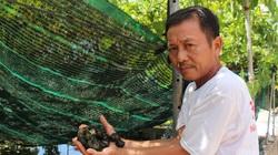 Nam Định: Nuôi loài ốc siêu đẻ bò quanh quẩn trong ao bèo, U60 thu tiền tỷ