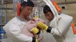 Trung Quốc khẳng định theo dõi sát tình hình cúm lợn, Việt Nam đủ năng lực xét nghiệm virus
