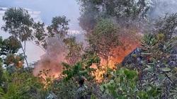 Đà Nẵng: Thắp nhang tại miếu thờ dẫn đến cháy rừng diện rộng