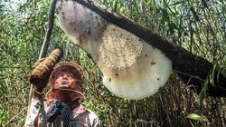 Cà Mau: Về U Minh Hạ thưởng thức sản vật đồng quê