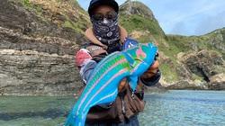 Con cá có màu sắc sặc sỡ khiến nhiều người nghi ngờ nó là sản phẩm của photoshop