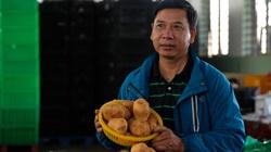 """Ông Chủ tịch Hội Nông dân """"rủ"""" 500 hộ trồng khoai tây lạ xuất khẩu sang Hàn Quốc"""