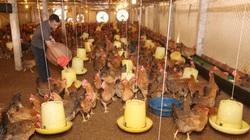Thái Nguyên: Đi học trồng rau, thú y, nông dân tự tin đầu tư 1,5 tỷ đồng nuôi gà