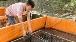 Cần Thơ: Kỹ sư CNTT bỏ lương triệu đô về nuôi con trơn nhớt, mỗi năm cung cấp 1 triệu con giống