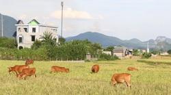 Kim Bôi xây dựng nông thôn mới gắn với phát triển kinh tế