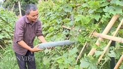 Điện Biên: Ông Chủ tịch Hội Nông dân mát tay chăn nuôi, trồng trọt thu 150-200 triệu/năm