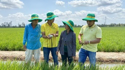 Đạm Cà Mau: Triết lý kinh doanh gắn với lợi ích nhà nông, lợi nhuận 6 tháng đạt gần 330 tỷ đồng