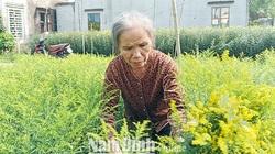Nam Định: Cả làng rủ nhau trồng loài hoa lạ, tên nghe như cổ tích, bán chạy như tôm tươi