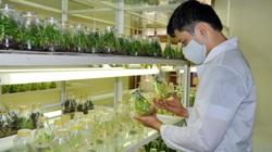 Chỉnh sửa gen - cơ hội cho chọn tạo giống cây trồng