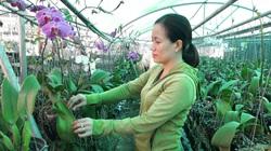 Trồng hoa lan trên đất nuôi tôm, dưới thả cá koi, không ngờ có tiền tỷ bỏ túi