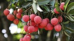 Cách để nông sản Việt được ưa chuộng tại Nhật