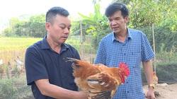 """Quảng Ninh: Lần đầu tiên có hội thi chọn """"Vua gà"""""""
