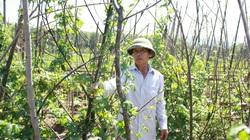 Nghệ An: Bí quyết biến 2 sào đất bạc màu thành vườn rau, quả xanh mát thu nhập cao