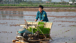 Cấy lúa bằng máy, nhà nông hết cảnh còng lưng, ruộng thẳng tắp làm gì cũng dễ
