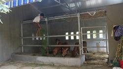 """Cận cảnh """"biệt thự"""" cho bò giá hơn 230 triệu đồng ở Nghệ An"""